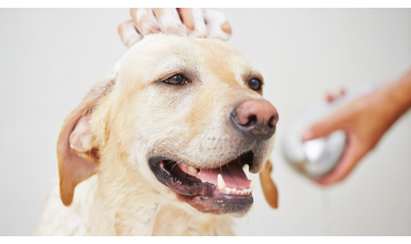 Shampoo Terapia per Cani